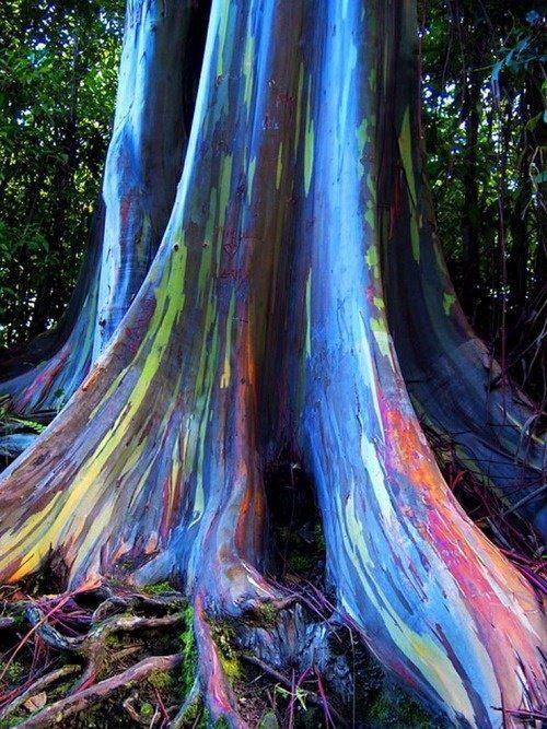 arbol-arco-iris (1)