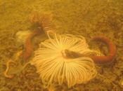 Enorme derrame melaza devasta vida marina Honolulu
