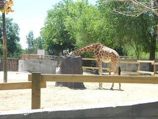 Madrid con niños (III): Zoo Aquarium de Madrid