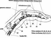 Lesiones dedos