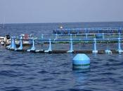 Secretaría General Pesca elabora Plan Estratégico Innovación desarrollo tecnológico sector Acuicultura 2013-2020