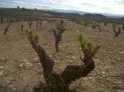 Rioja, tierra nombre vino