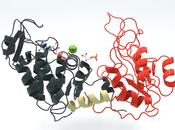 Ciclo Kalvin-Benson. Fosfogliceraldehído bifosfogliceraldehído