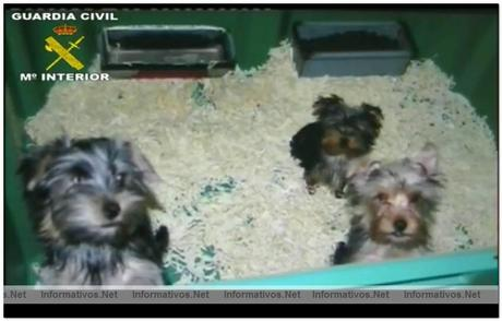 Desmantelada una red de venta de perros por Internet