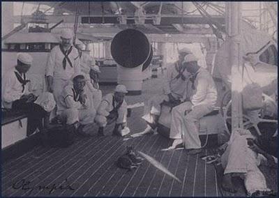 Gatos marineros