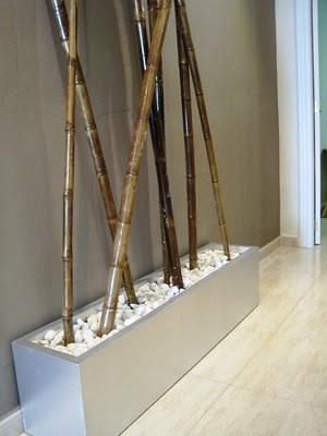 Nuevos aires para un sal n de est tica paperblog - Jardineras con bambu ...