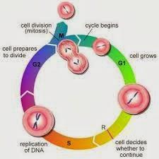 Introducción a la reproducción celular