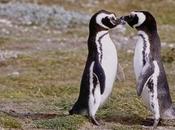 Pinguino Magallanes emperador indiscutido Patagonia