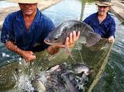 Noticia: Brasil publica primer censo acuícola