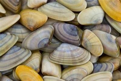 Aperitivos y Entrantes valencianos (mejillón, tomate, esgarrat, albóndigas de bacalao, mollejas - lleteroles, tellinas, caracoles ..) Spanish appetizers