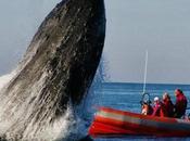 saltar ballena jorobada alegría lado)