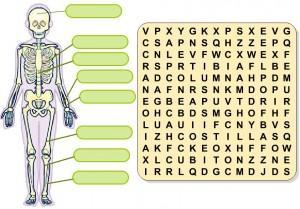 los huesos del cuerpo humano 1
