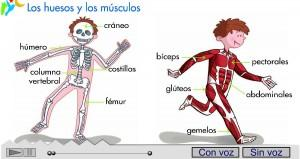 canción de huesos y músculos