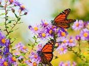 Cómo Crear Jardín Mariposas