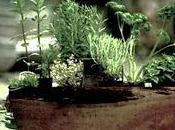 Hierbas Crecen Mejor Jardineras Madera