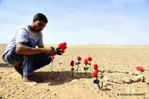 Moulud Yeslem siembra flores en el muro marroquí en el Sahara Occidental