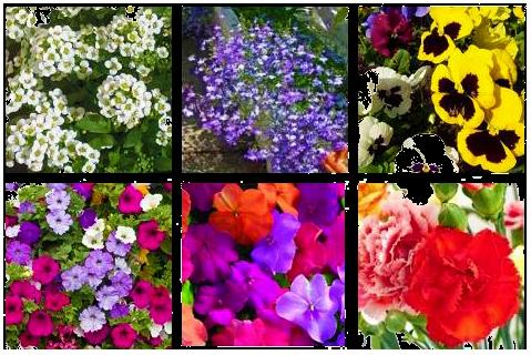 12 de las plantas m s coloridas para tus jardineras de - Plantas para jardineras ...