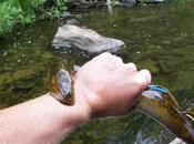 ¿Porqué lamprea encuentra sexi bilis?