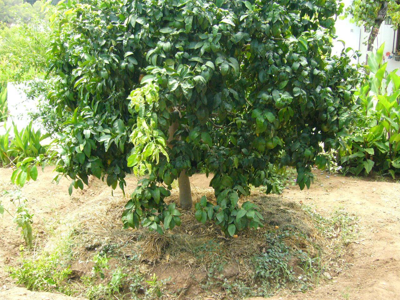 Jard n ecol gico natural y sencillo paperblog for Jardin y natura