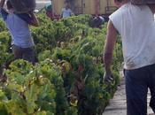 vendimia Condado Huelva finaliza descenso producción mayor calidad