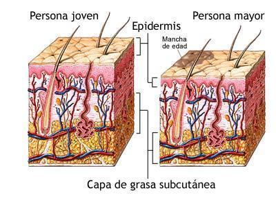 La piel segun la edad