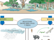 ¿qué ecosistema?