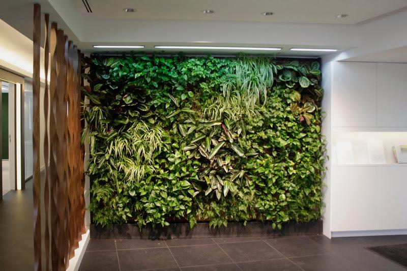 Jard n vertical de interior en madrid paperblog for Plantas usadas para jardines verticales