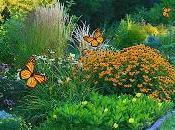 Cómo Diseñar Jardín Mariposas