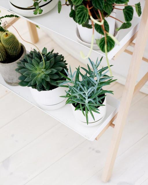 Decorar con plantas la casa paperblog - Plantas para jardin zen ...