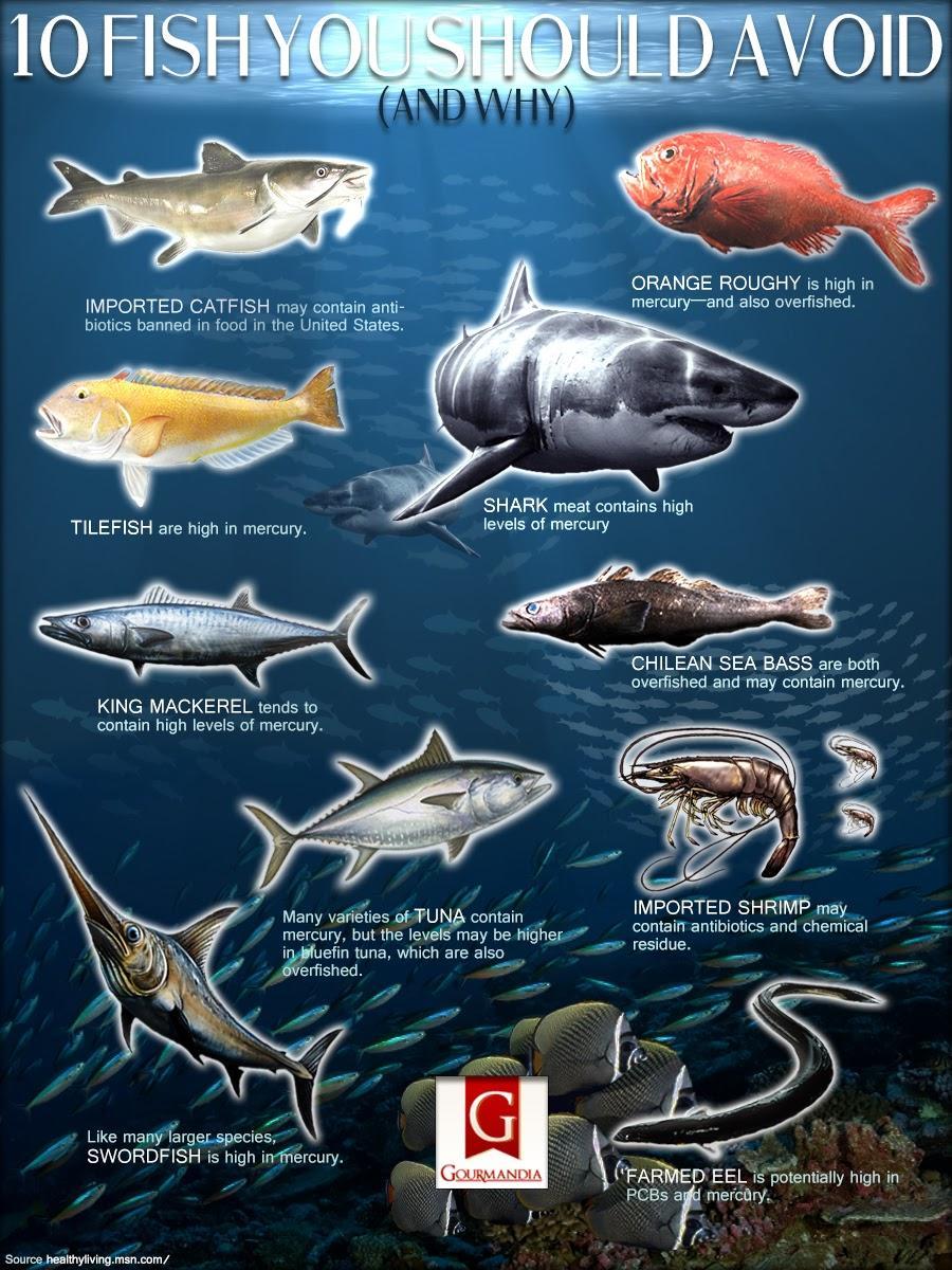10 peces que deber as evitar infograf a serhumano for Cria de peces para consumo humano