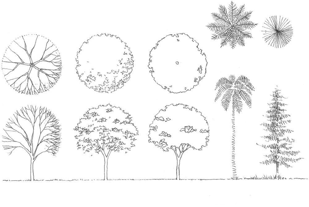 como dise u00f1ar arboles para paisajismo y arquitectura