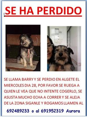 BARRY SE HA PERDIDO EN ALGETE, MADRID.
