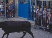 Castalla. Fiestas Sant Vaca 2010