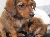 Doby Cinta, cachorros maltratados barrio Roque (Cadiz)