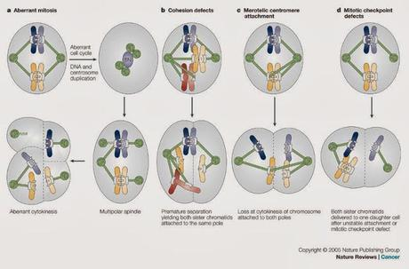 Probabilidades de la aneuploidia
