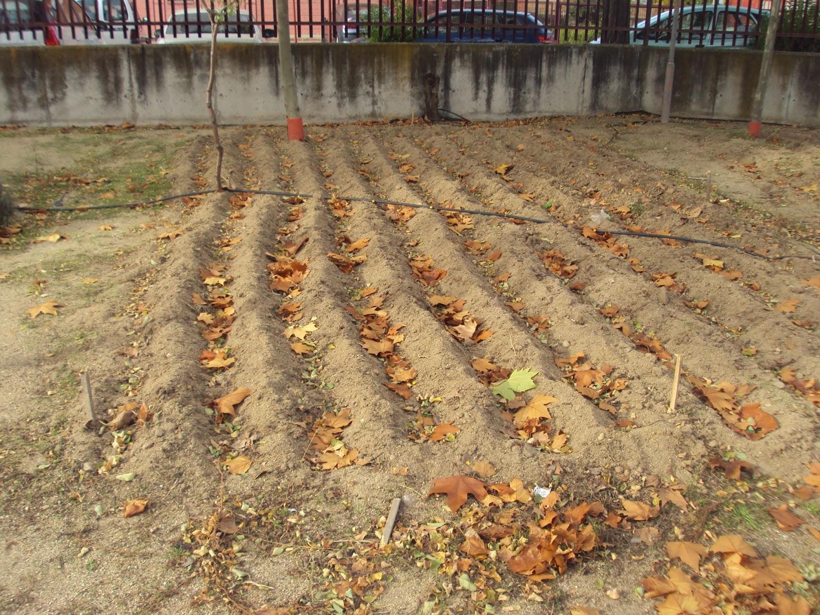Los cultivos de invierno en el huerto paperblog for Preparar el huerto en invierno