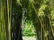 Ropa bambú