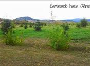 Blogger Traveller: Hojas
