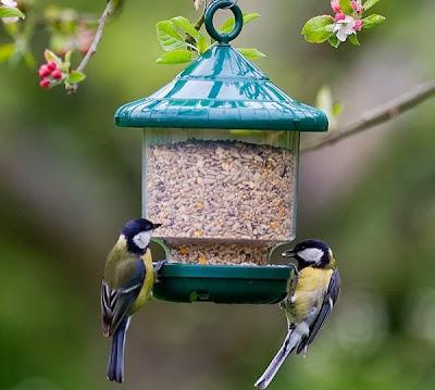 Y el comedero de aves silvestres es para paperblog - Comedero de pajaros ...
