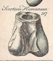 El Escroto humano, el primer dinosaurio de la historia