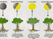 Plantas Fases Lunares