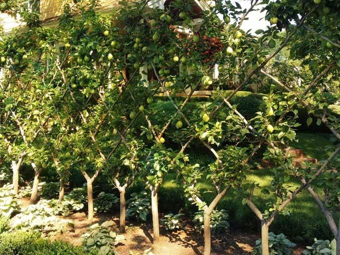 frutales en espaldera para jardines peque os paperblog