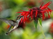 Cómo optimizar blog Google Hummingbird