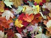 Homeopatía: otoño estado ánimo