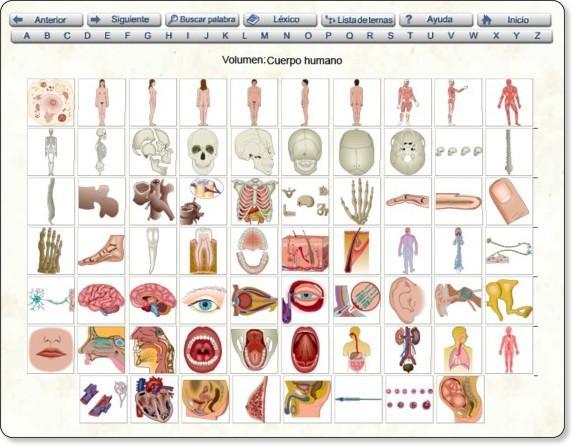 Cuerpo humano visual