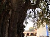 Visita Árbol Santa María Tule, Oaxaca