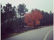 Repasando noviembre