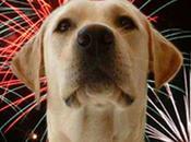 fuegos artificiales navideños nuestras mascotas