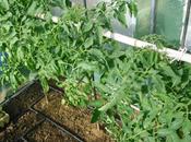 Desarrollo plantas invernadero
