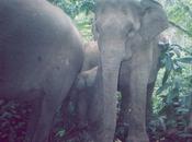 Wildlife Picture Index: Usando Data para Protección Naturaleza